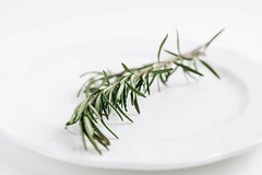 Close up of fresh rosemary on white background (wuestenigel) Tags: spice herbs medicine image beauty collection background healthy clean plant italian scented tied health isolated white single eating season closeup branch space twig fresh food culture backgrounds summer herb herbal ingredient raw rosemary objects freshness object green nobody plants nature organic