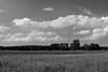 Landschaft bei Neddernhof / Landscape near Neddernhof (Lichtabfall) Tags: summer sommer schwarzweiss monochrome landschaft blackandwhite blackwhite landscape einfarbig bäume trees wolken clouds sky himmel felder fields feld field