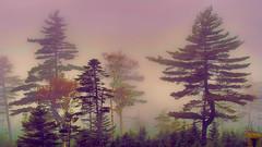 fog-2007-XTi-09-22-42