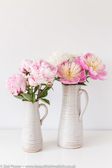Peonies from my garden - can you tell I  have a thing for pink?! (Zoë Power) Tags: peonies bowlofbeauty summer sarahbernhardt peony flowers mygarden pink