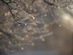 Eblouissement -* (Titole) Tags: branches light frost frosted shallowdof titole nicolefaton bokeh thechallengefactory