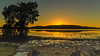 Sunrise Waterscape with Tree and Ducks (Merrillie) Tags: daybreak woywoy landscape nature australia foreshore newsouthwales earlymorning nsw brisbanewater bay tree morning water coastal sunrise outdoors waterscape sky centralcoast ducks dawn