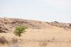 Arid landscape in Namibia. (annick vanderschelden) Tags: grass trees mountain sky blue clouds desert landscape africa namibia boulders rocks stones sand grasses