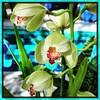 Like a kid in a candy shop. #Usbg #botanicgarden #goodgarden #dcgarden #nationalgarden #washingtondc #dc #dclife #downtown #iphone #iphone365 #iphone7plus #downtown #dclife  #nationalmall #nationalparks #iPhonemacro #macro  #flower #flowersofinstagram (Kindle Girl) Tags: iphone7plus nationalparks usbg botanicgarden goodgarden dcgarden nationalgarden washingtondc dc dclife downtown iphone iphone365 nationalmall iphonemacro macro flower flowersofinstagram