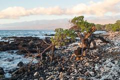 Hawaii 081.jpg (mfeingol) Tags: puako sunset hawaii holoholokaibeachpark bigisland waimea unitedstates us