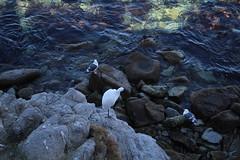 IMG_7662 (mudsharkalex) Tags: california pacificgrove pacificgroveca