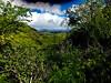 On the trail to the top of Diamond Hill - Waikiki 2017 1a (litlesam1) Tags: hawaii oahu neverendingbirthay2017 november2017 waikiki diamondhead