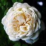 Queen Sirikit Botanic Gardens. thumbnail