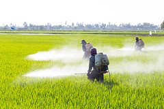 Pesticidas levam a dificuldades para engravidar (procuramed) Tags: pesticide pesticides farmer spraying field agriculture farm paddy worker rice chemical toxic spray green insecticide plant equipment water machinery protective agribusiness engine pollutant agricultural industry asia pollution