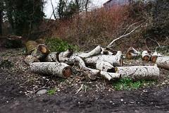 DSC_8956 (PeaTJay) Tags: nikon england uk gb royalberkshire reading winnersh flowers plants trees bushes