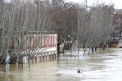 Crue de la Seine - Paris (02/2018) (eguilmard) Tags: crue seine seineriver flood paris france