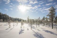Soljasten soilla (Markus Heinonen Photography) Tags: seitseminen seitsemisen kansallispuisto nationalpark national park suo mire mosse talvi winter suomi finland europe maisema landscape luonto nature saarisoljanen soljaset