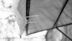 ''Winter is coming'' (ettigirbs2012) Tags: neige snow mars march glace ice paris