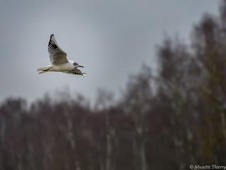 Vol au-dessus du bois