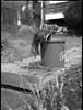 onion grass, pulled, bucket, sidewalk, North Asheville, NC, Mamiya 645 Pro, mamiya sekor 80mm F-2.8, 3.20.18 (steve aimone) Tags: onions oniongrass pulled bucket sidewalk northasheville asheville northcarolina mamiya645pro mamiyasekor80mmf28 mamiyaprime primelens 120 film 120film mediumformat ilfordfp4 ilfordilfosol3developer monochrome monochromatic blackandwhite