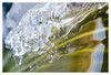 Ice sculpture (leo.roos) Tags: ice ijs winter water frozen twoudt middendelfland a7rii meyerprimoplan5819 exakta 1954 darosa leoroos dayprime day58 dayprime2018 dyxum challenge prime primes lens lenzen brandpuntsafstand focallength fl