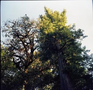 Humboltd Redwoods (120)