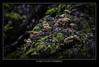 Mushrooms from Patagonia Argentina - Hongos de la Patagonia Argentina (Pablo B. Picardi) Tags: pablopicardi mushroom nature viajes landscape travel argentina outdoor nikon vacation places lugares folowme