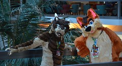 NordicFuzzcon 2018 424 (finbarzapek / SeanC) Tags: nordicfuzzcon nordic fuzzcon fuzz con 2018 fursuit fursuits furry furries convention stockholm sweden animal costumes