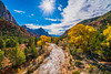 Zion NP Fine Art Autumn Leaves Landscape Photography! The Watchman Bridge View Fall Foliage Virgin River!  Sony A7RII Zion National Park  Dr. Elliot McGucken Fine Art Landscape & Nature Photography! High Res! (45SURF Hero's Odyssey Mythology Landscapes & Godde) Tags: sony a7rii canyon zion national park autumn dr elliot mcgucken fine art landscapes sonya7r2 sonnar tfe 55mmf18zalens sonya7rii a7r2 a7r a7 sonya7 sonya7r sonya7r2malibufineartlandscapessunsetssonya7riisony1635mmvariotessartfef4zaossemountlensdrelliotmcguckenfineartphotography carlzeiss sonyfe24240mmf3563osslens elliotmcgucken elliotmcguckenphotography 45surf fineartlandscape landscapephotography fineartlandscapes landscape drelliotmcgucken sonya7rfineart np leaves photography the watchman bridge view fall foliage virgin river nature