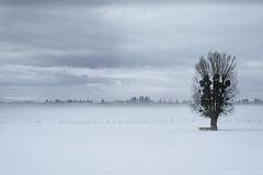 L'audacieux (photofabulation) Tags: arbre tree neige snow fog brouillard brume mist champs fields vaud romandie suisse switzerland europe europa