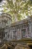 Ta Prohm Temple (Erik Strahm) Tags: seasia2017 plant tree khmer ruins houseofworship buddhisttemple angkor siemreap cambodia kh