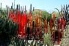 Chihuly Glass (joeksuey) Tags: chihuly glass spring desertbotanicalgarden phoenix arizona joeksuey cactus bird boat agave saguaro colors exhibit floraandfauna reflection bloomingpaloverde butterfly wildflowers balls hummingbird