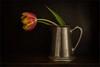 Tulip (suzanne~) Tags: stilllife flower pitcher silver tulip floral darkbackground tabletop