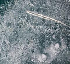 Ice-cold east wind (yellowgreywolf) Tags: ice cold east yellowgreywolf waterytrunkthin marsmonth