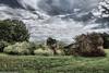 Gespalten (Thomas Feiereis) Tags: natur naturpark weide bäume tree forest landscape
