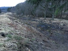 Cleared scrub at glade 22Mar18