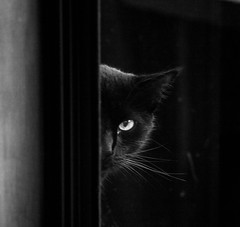 24 mar 2018 - photo a day (slava.connect) Tags: dailyphoto photoaday 365 1day blackandwhite bw monochrome cat blackcat blanconegro