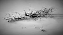 Life and Death (faridisaad) Tags: black white fujifilm long exposure nd filter cokin