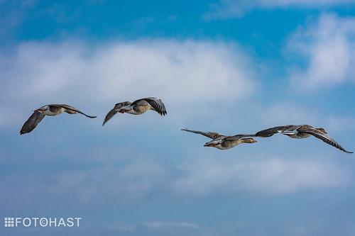 """""""de luchtmacht aanwezig boven het IJsselmeer"""""""