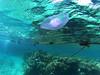 Viața sub apă (Dumby) Tags: subapă eilat israel southerndistrict redsea aqabagulf q2755 qilive sportcam jellyfish colors nature