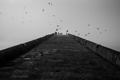 bridge across forever / today I had a dream (Özgür Gürgey) Tags: 2018 35mm bw büyükçekmece d750 nikon samyang birds bridge fog grainy people silhouettes stone istanbul