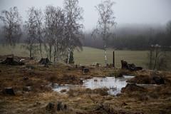 Innan snön (Anders Österberg) Tags: sweden landskap landscape winter vinter fog dimma water vatten beacheslandscapes