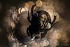 Beetle (Rob Blanken) Tags: beetle bokeh