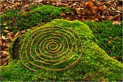 moos spirale (Hanspeter Ryser) Tags: landart kunst art wald baumstrunk natur objekt schweiz hildisrieden grün braun laub moos haselnuss haselnussblüten