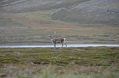 2015 08 25_d5100_0125 (swedgatch) Tags: swedgatch sweden nikon nature nikkor naked north d5100 18200mm norrland nord cape art artistic angle action color colors capture photography photograph photo photographs photos photographer perspective beautiful by beauty the norway