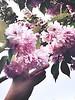 #flower #spring #beautiful #heaven #love (ssgungor1) Tags: flower spring beautiful heaven love