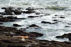 MAR_1815_00002 (Roy Curtis, Cornwall) Tags: uk cornwall falmouth kestral foreshore gyllingvasebeach birds coast sea