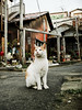 neko-neko2044 (kuro-gin) Tags: cat cats animal japan snap street straycat 猫