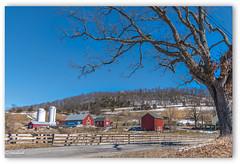 Old  MAC DONALD....... had a Farm.......E-I-E-I-O (Xacobeo4) Tags: barn tree