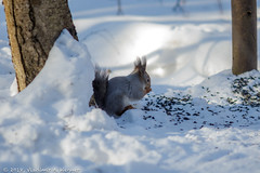 2018-03-19-08-29-29-7D2_3983 (tsup_tuck) Tags: 2018 march moscow spring woods