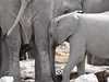 Move it mum! (zimpetra) Tags: mammal elephants etosha namibia waterhole