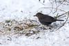 Garden birds (Steven Vacher) Tags: bird birds canon6d canon stevenvacher 400mm