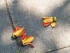 P3114067 (M.Y.Jerry Kuo) Tags: schneiderkreuznach retinaxenon 50mm f19