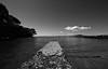 Groyne at Milford Beach (Kai Pluschke) Tags: monochrome ocean sea milford newzealand groyne buhne auckland