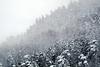 PIO_3188M (MILESI FEDERICO) Tags: milesi milesifederico italia italy iamnikon piemonte piedmont paesaggio panorama inverno winter landscape nikon nikond7100 nital natura nature nat d7100 dettagli details 2018 marzo wild visitpiedmont valsusa valdisusa valliolimpiche valledisusa alpi alpicozie visitvaldisusa neve nevicata snow neige inmontagna montagna montagne mountain alberi
